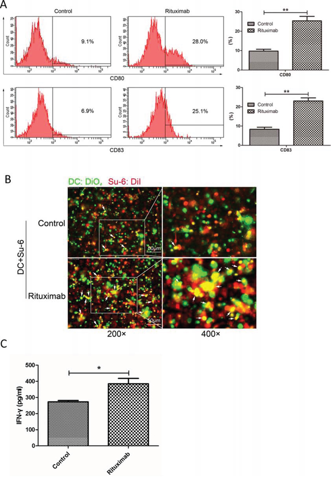 Rituximab induced immune response in both DCs and cytotoxic T-cells.