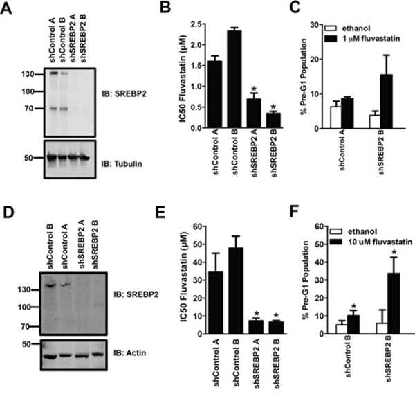 Stable knockdown of SREBP2 sensitizes breast cancer MDA-MB-231 and MCF7 cells to the pro-apoptotic and anti-proliferative effects of fluvastatin.