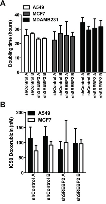 Knockdown of MVA pathway genes does not sensitize breast and lung cancer cells to the anti-proliferative effects of doxorubicin.