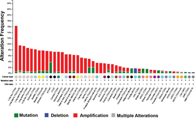 HMGCS1 is amplified in various cancers.