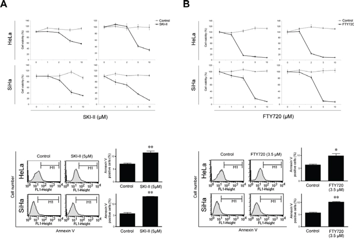 Effects of SPHK inhibitors SKI-II and FTY720 on cell survival and apoptosis in HeLa and SiHa cells.