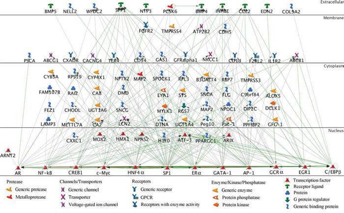 Network of txr genes.