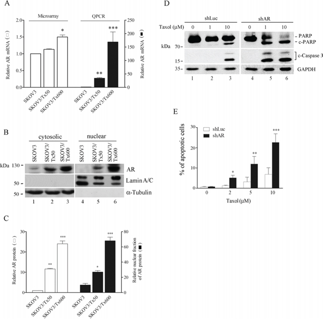 AR expression and nuclear location is associated with taxol sensitivity.