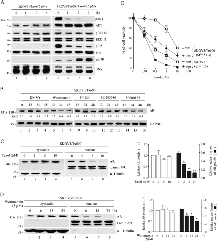 AKT pathway as a target of taxol in regulating AR activity.