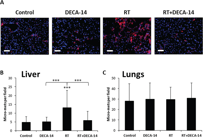 Dequalinium-14 (DECA-14) inhibits radiation-induced micrometastasis.