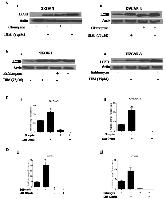 Bafilomycin or chloroquine block DIM induced autophagy in ovarian cancer cells.