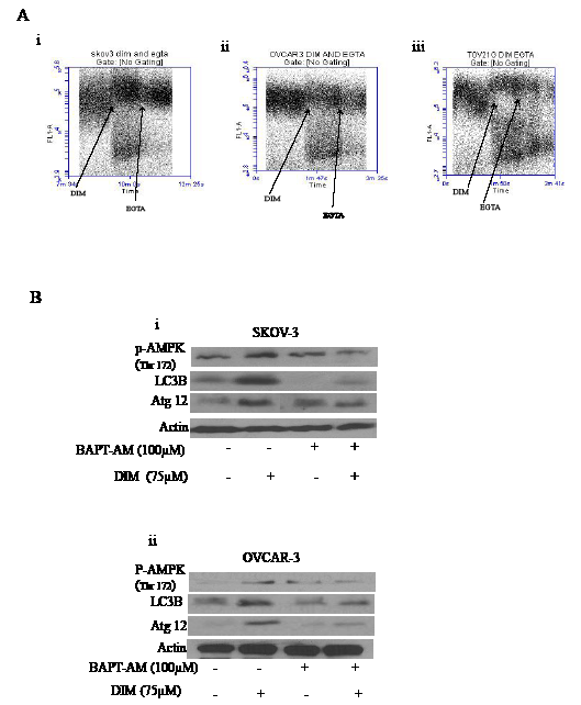 Increase in the cytosolic calcium plays a crucial role in DIM induced autophagy.