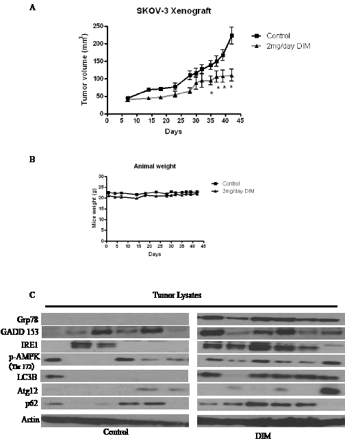 DIM suppresses the growth of ovarian tumors in nude mice by inducing ER stress modulated autophagy.