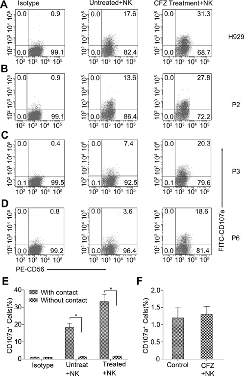 CFZ treatment enhanced the NK cell degranulation in MM cell lines and patients' MM cells.