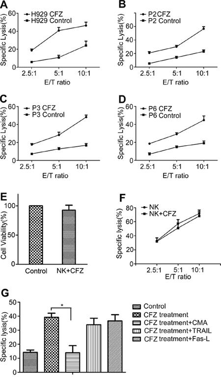 CFZ treatment enhanced NK cell-mediated lysis.