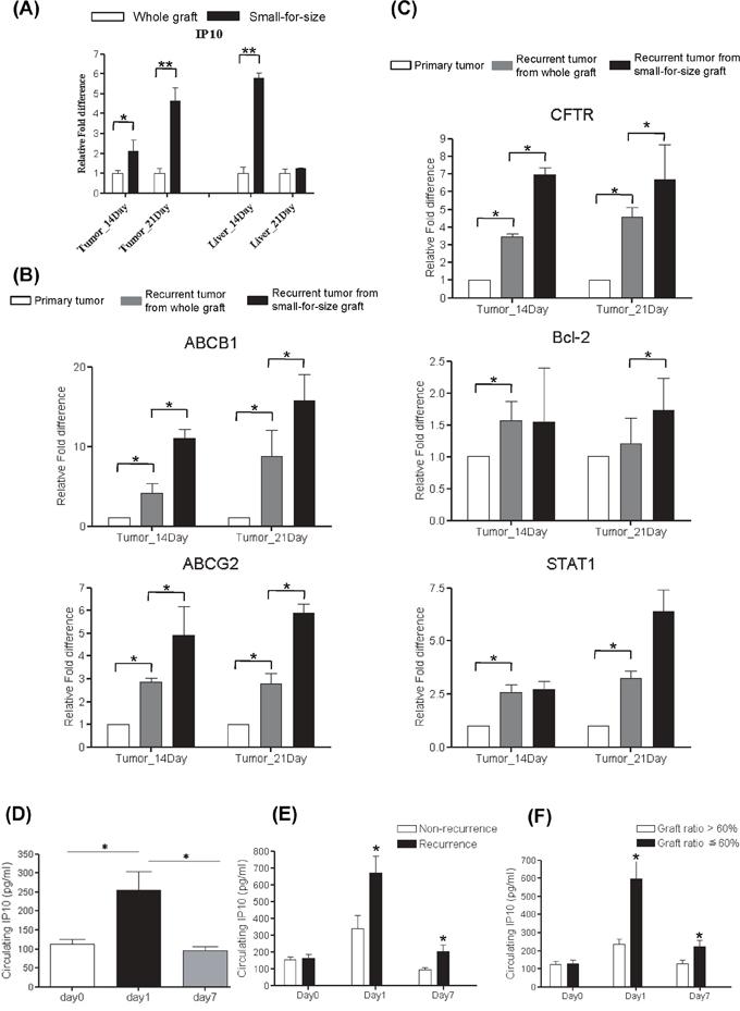 Over expression of Multidrug resistant genes in rat liver transplantation model and the expressions of IP10 in human liver transplantation.