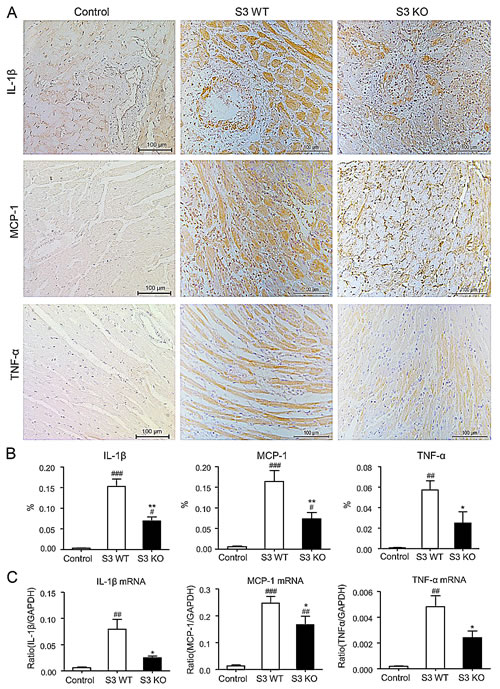 Improvement of cardiac allograft rejection in Smad3 deficient recipients is associated with inhibition of upregulation of proinflammatory cytokines.
