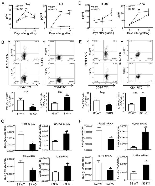 Deletion of Smad3 differentially regulates T cell differentiation during cardiac allograft rejection.