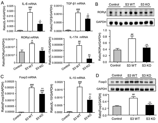 Deletion of Smad3 from the recipients suppresses Th17 and Treg immune response in cardiac allografts.