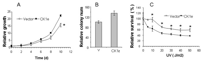 Overexpression of active CK1ε enhances growth of tumor cells in vitro and sensitivity to UV exposure.