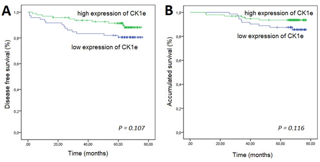 Kaplan-Meier survival curves for breast cancer patients who were classified with either low or high CK1Ɛ expression.