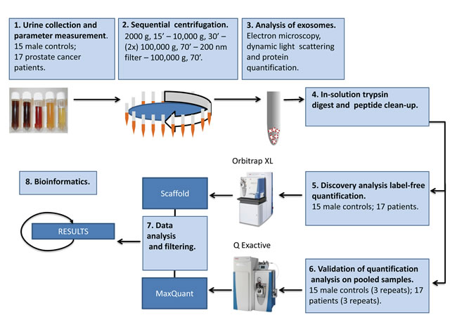 Schematic procedure for isolation and characterization of urinary exosomes.