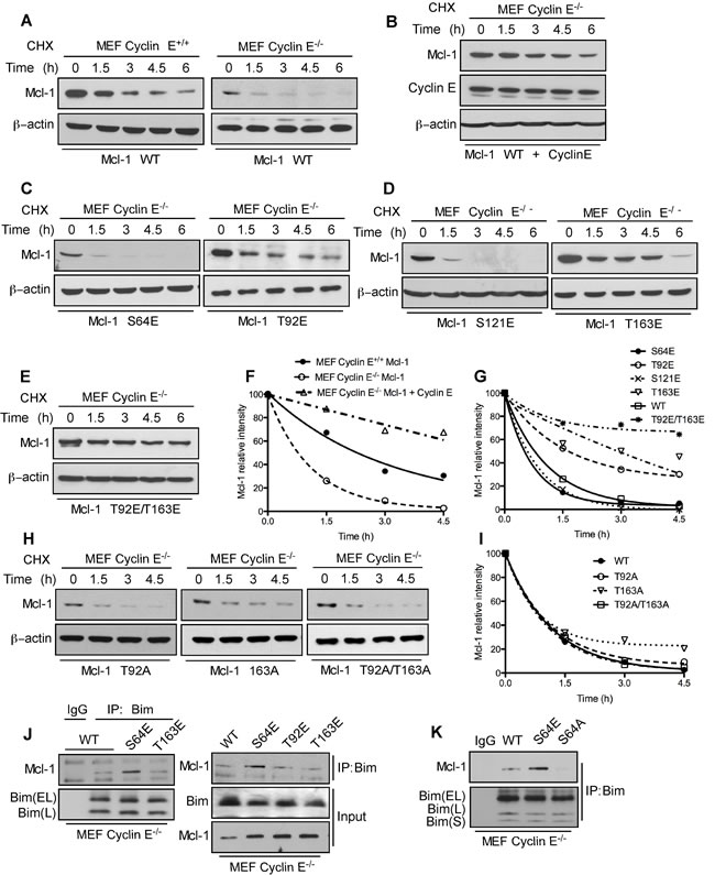 Mcl-1 stability and Bim sequestration is dependent on cyclin E/Cdk2.