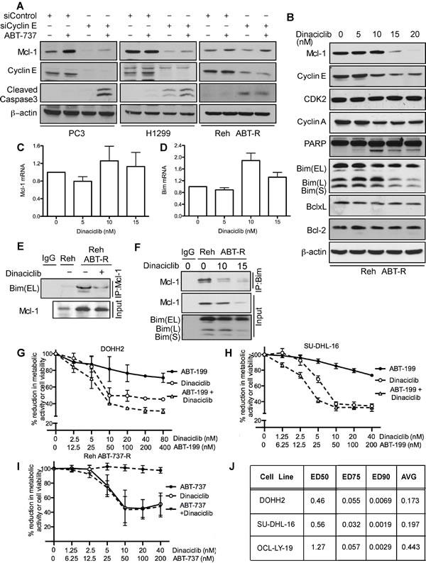 Cyclin E/Cdk2 inhibition sensitizes tumor cells to ABT-737/ABT-199.