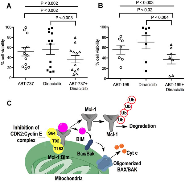 Dinaciclib sensitizes CLL cells to ABT-737 and ABT-199.