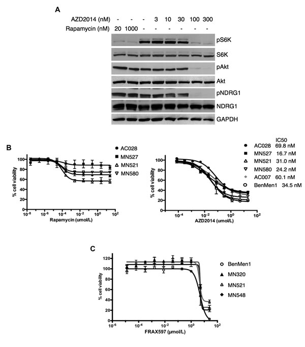 AZD2014 is more effective than rapamycin or FRAX597 in decreasing cell viability in NF2-deficient primary meningioma cells
