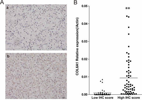 COL6A1 IHC score was correlated with mRNA level.