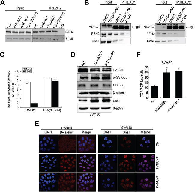 DAB2IP is negatively regulated by EZH2/HDAC/snail linear transcription complex.
