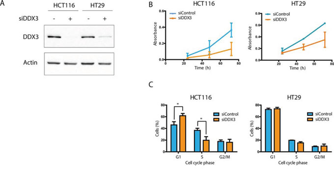 DDX3 dependency in colorectal cancer cell lines.
