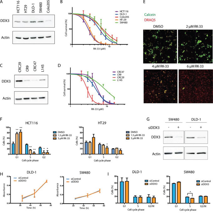RK-33 sensitivity in colorectal cancer cell lines.