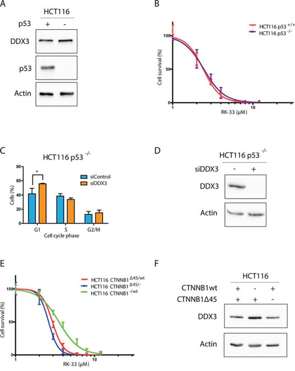 DDX3 dependency in different colorectal cancer genetic subtypes.