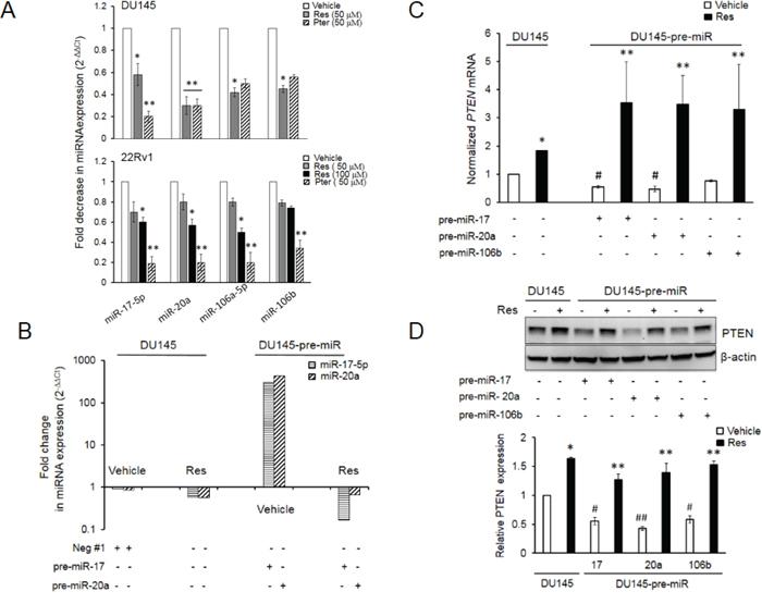 Resveratrol and pterostilbene reversal of miR-mediated downregulation of PTEN mRNA and protein.