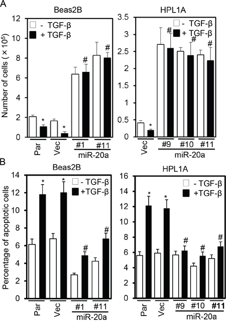 Stable expression of miR-20a inhibits TGF-β-induced growth inhibition and apoptosis.