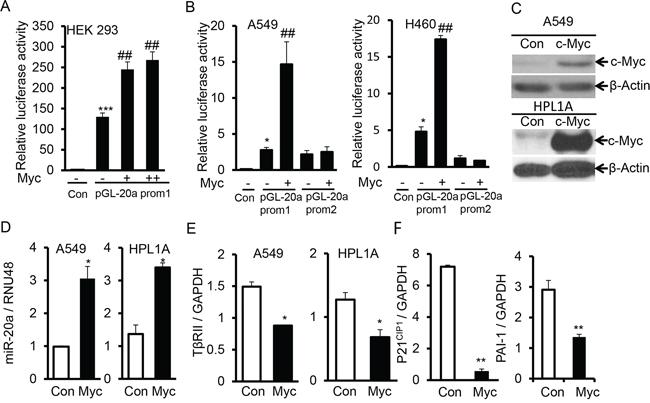 C-Myc downregulates TβRII and inhibits TGF-β signaling through inducing miR-20a expression.