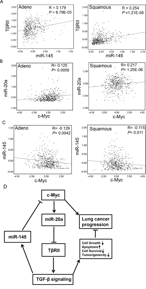 Correlation between the expressions of TβRII and miR-145 and miR-20a and c-Myc in NSCLC.