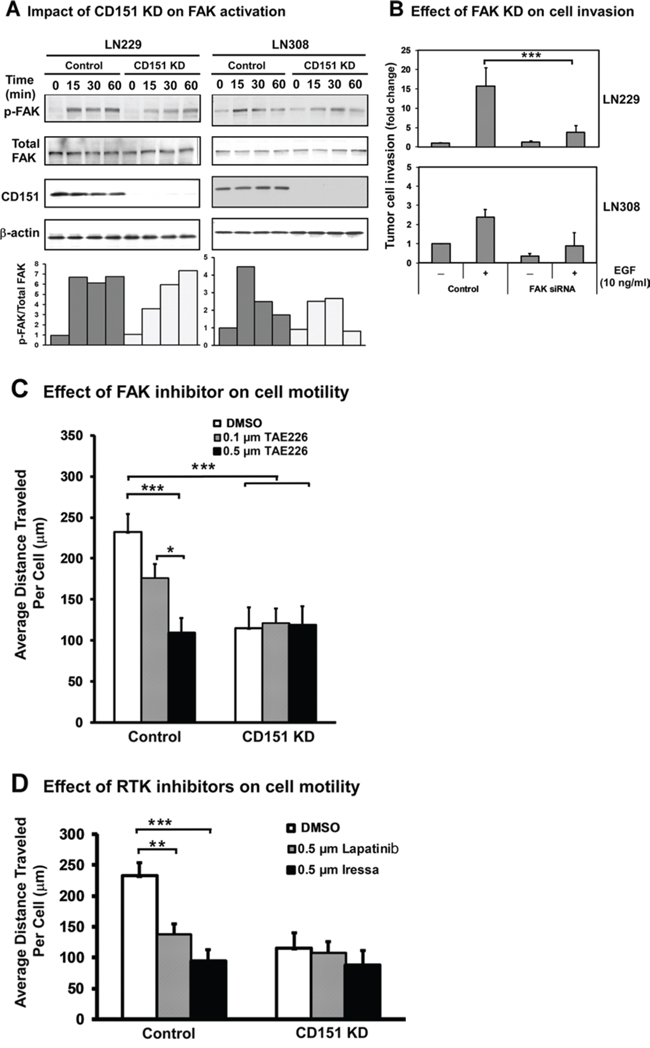 Activation of FAK in glioma cells by CD151-α3β1 integrin complexes and their crosstalk with EGFR.