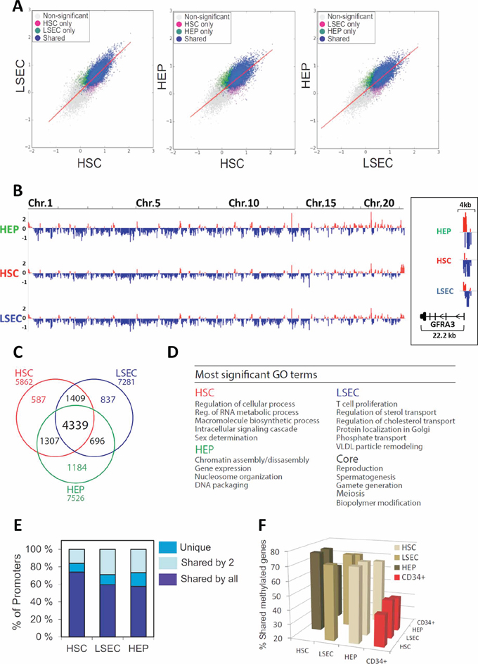 MeDIP-chip analysis of the promoter DNA-methylome of human HEPs, HSCs and LSECs.
