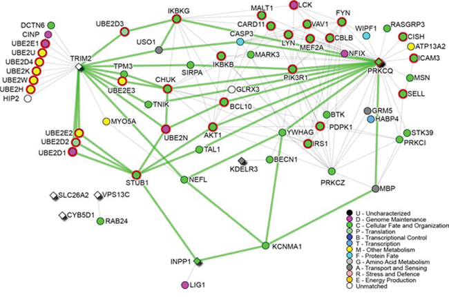Survival signature network.