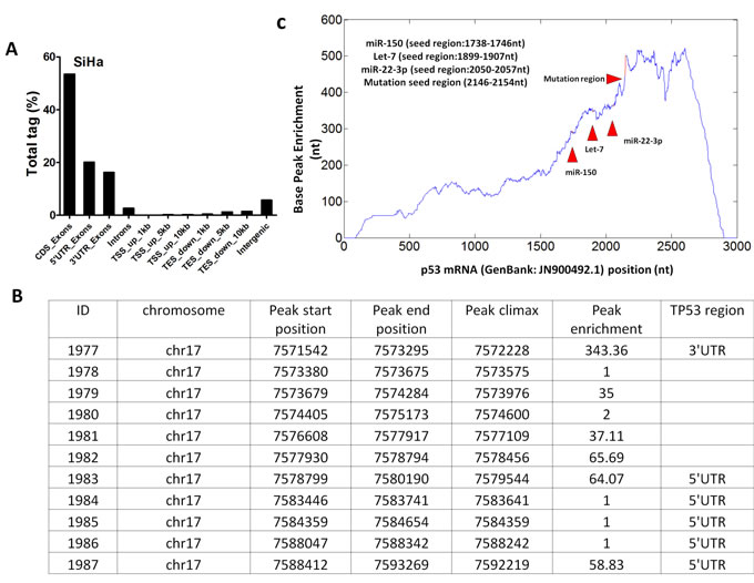 Analysis of the single nucleotide-resolution peak enriched for p53 mRNA.