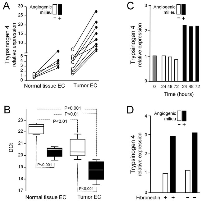 """Effect of the angiogenic milieu mimicking a """"tumor microenvironment"""" on trypsinogen 4 expression."""