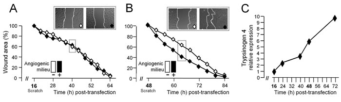 Trypsinogen 4 mediates the microenvironment-induced migration of tumor endothelial cells.