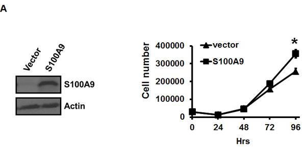 Pro-tumorigenic effect of tumor-derived S100A9