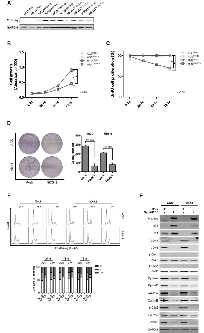 Effects of NKX6.3 on cell viability, cell proliferation, and cell cycle.
