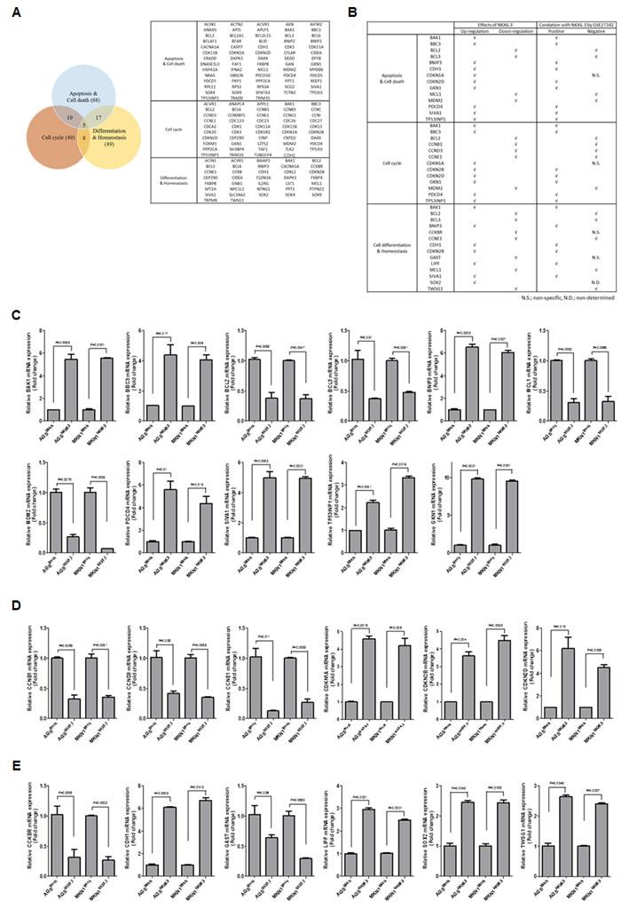 Predicted target genes of NKX6.3.