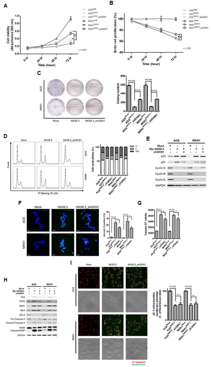 The role of GKN1 in NKX6.3-induced anti-cancer effects.