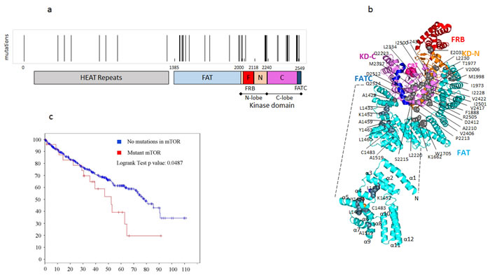Point mutations in MTOR are clustered in various regulatory domains in ccRCCC and are associated with poor prognosis.