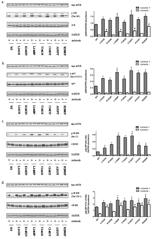 Mutations in the FAT domain promote mTORC1 activation.