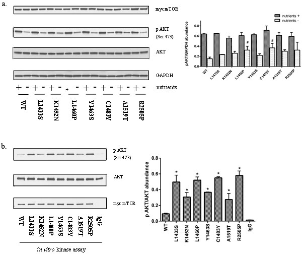 Mutations in the FAT domain promote mTORC2 kinase activity.