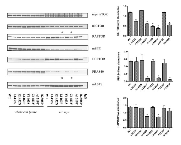 Mutations in the FAT domain of mTOR lead to altered DEPTOR and PRAS40 binding.