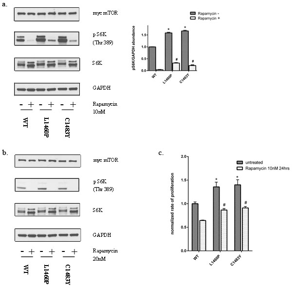 Mutations in the FAT domain of mTOR lead to decreased sensitivity to the inhibitory effects of rapamycin at clinically relevant doses.