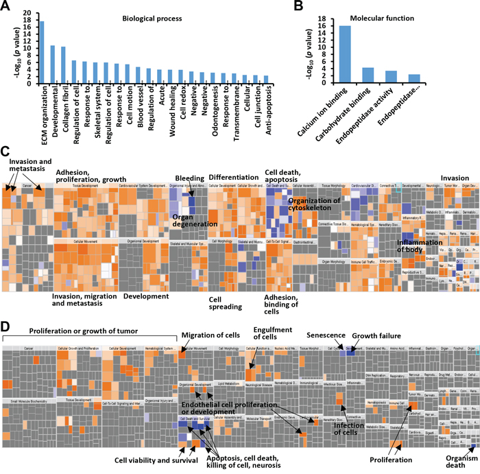 GO and IPA analysis of colonic fibroblast- or colon cancer cell-enriched proteins.